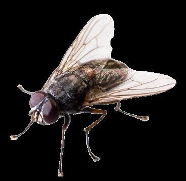 mouche-d-automne